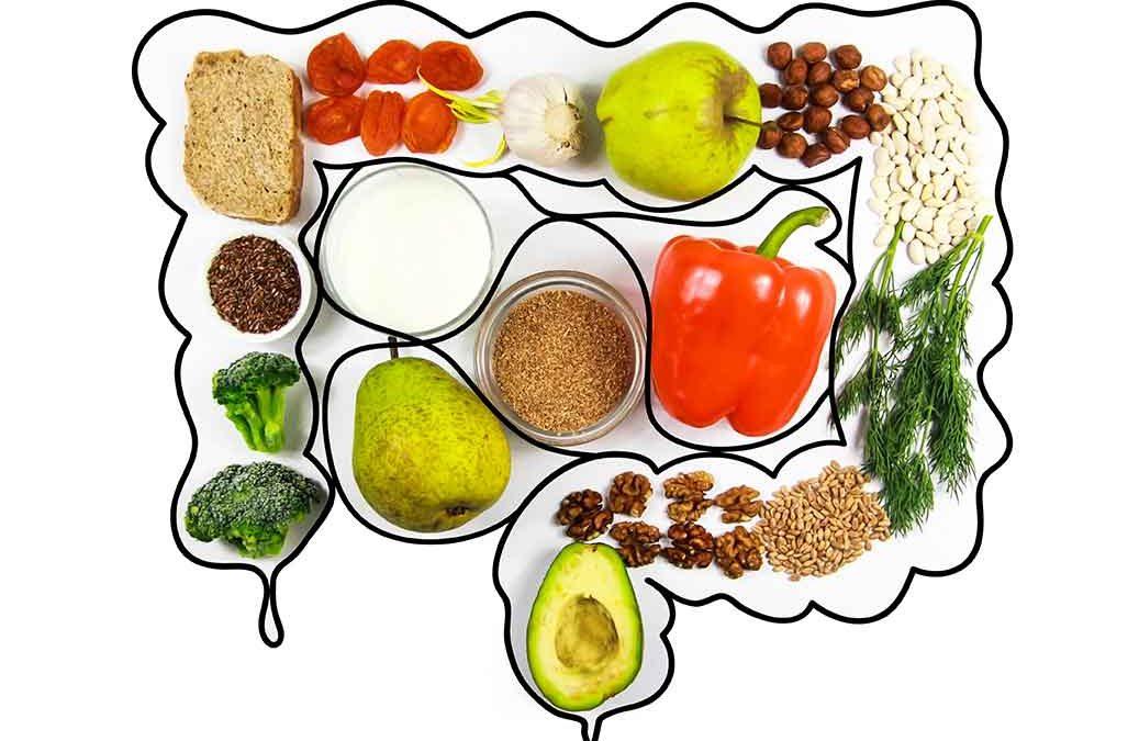 Nutrition et Digestion